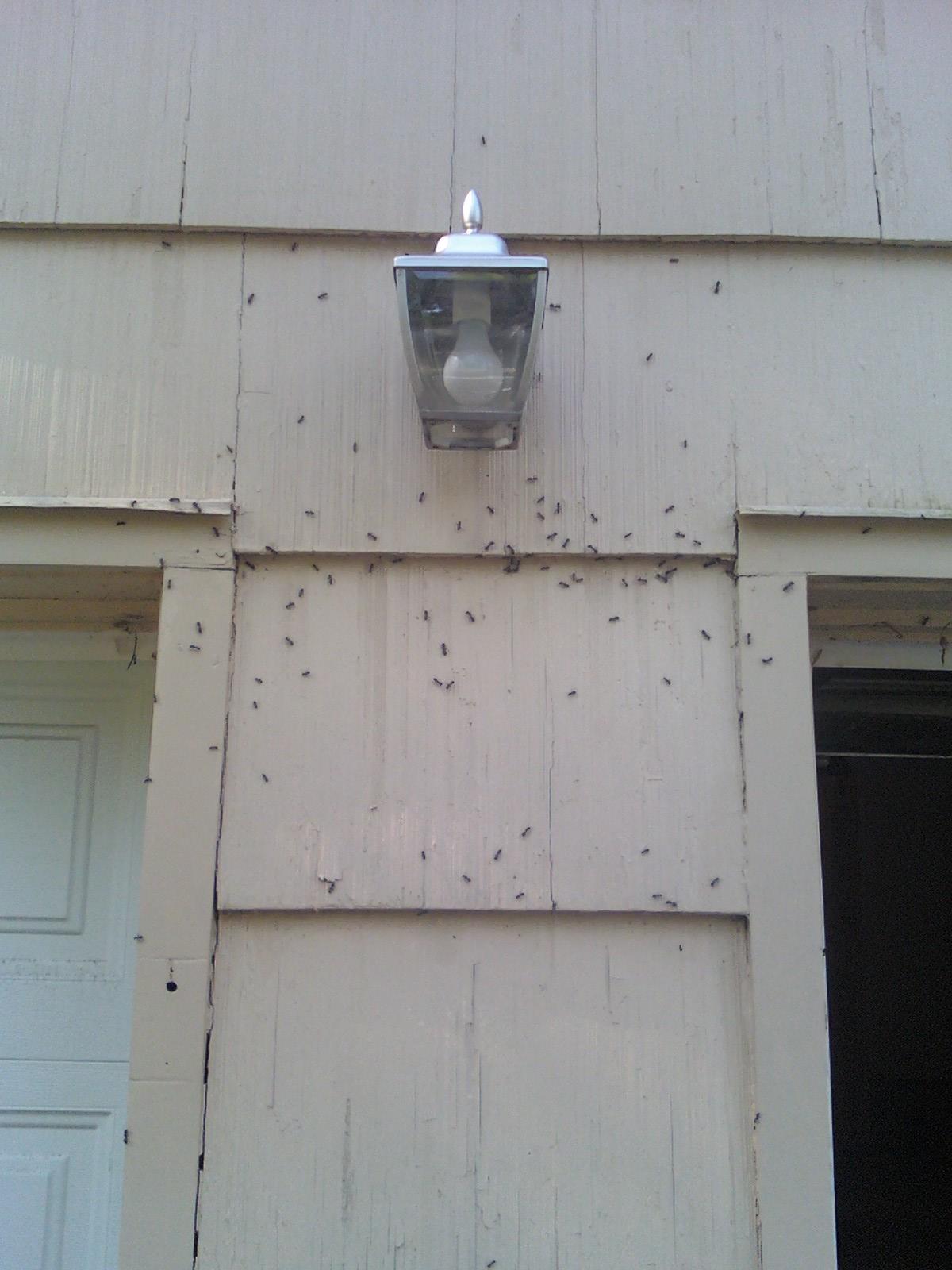 advantage-pest-control